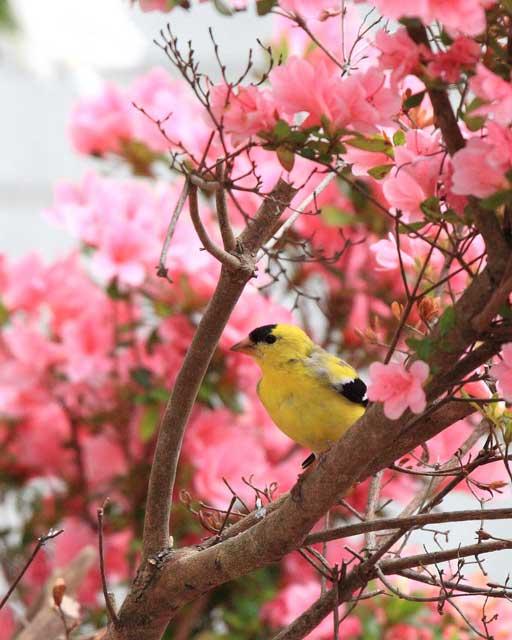 Birds near Greenville, North Carolina at Big Mill B&B, named a birder friendly business