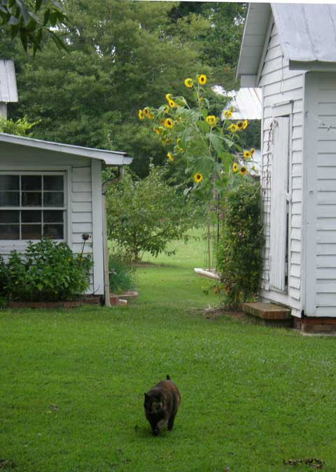 Idyllic life on the farm at Big Mill Bed and Breakfast