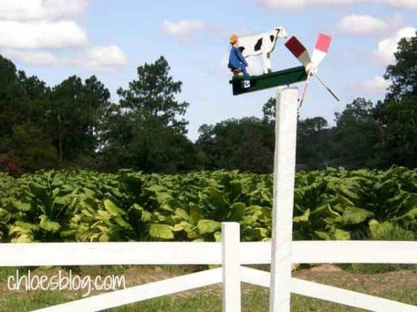 whirly gig in eastern NC | Whirligigs are everywhere at Big Mill B&B-this one overlooks the tobacco field | https://chloesblog.bigmill.com/whirligigs-and-tobacco/