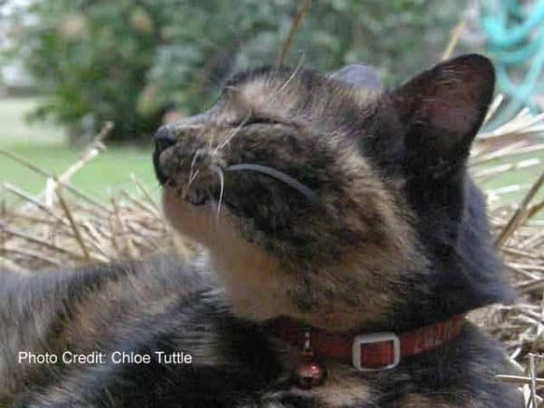 This precious kitty is enjoying a sun bath at the farm B and B, Big Mill, in Williamston, NC   https://chloesblog.bigmill.com/a-letter-from-the-fur-person/