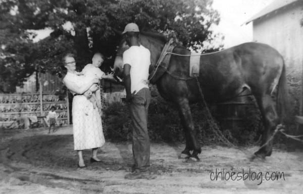 Mary the Mule poses during tobacco harvest |1950's photo of Mary the mule with tobacco truck @BigMill |Tobacco flowers in field near Williamston, NC | Tobacco-field-in-easten NC-Big-Mill-Inn @bigmill | www.chloesblog.bigmill.com/tobacco-big-mill-inn