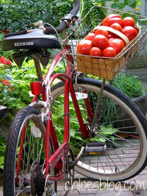 homegrown tomatoes in bicycle at Big Mill Farm B&B | www.chloesblog.bigmill.com/farmhouse-tomato-sandwich-the-mayonnaise-debate/