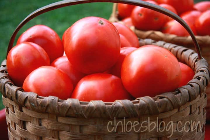 Fresh tomatoes from the garden at Big Mill B&B near Greenville, NC | chloesblog.bigmill.com