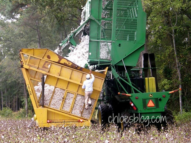 Making cotton bales in eastern North Carolina, near Big Mill Bed and Breakfast
