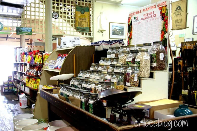 Seed jars at Martin Supply Feed Store in Williamston NC -- It's an old-time hardware store where you can buy 8 butter bean seeds, if that's all you need.| chloesblog.com