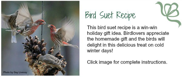 Bird lovers will appreciate this easy suet recipe from NC innkeeper. Perfect for holiday giving or any day. Birds will love you for it too! | https://chloesblog.bigmill.com/how-to-make-suet-innkeepers-recipe/