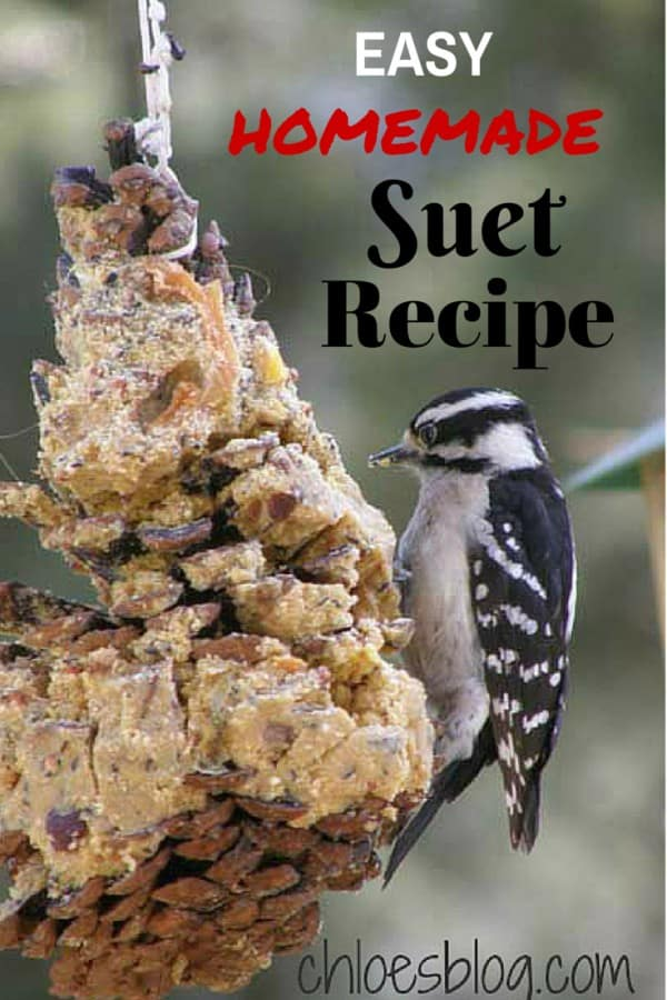Easy homemade Suet recipe from Innkeeper at Big Mill B&B | https://chloesblog.bigmill.com//easy-homemade-suet-recipe