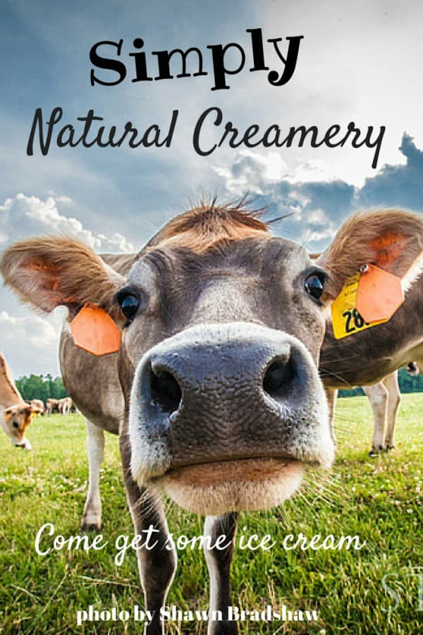 Best Ice Cream in eastern NC at Simply Natural Creamery | chloesblog.bigmill.com/natural-dairy-simply-natural-creamery-in-eastern-nc