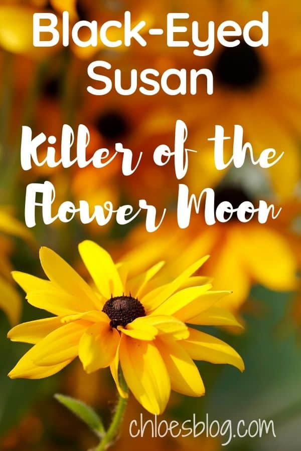 Black Eyed Susan photo Killer of the Flower Moon