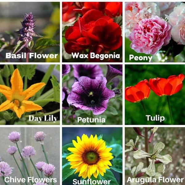 Many flowers in your garden are edible. At Big Mill Bed and Breakfast we try to serve an edible flower with every meal.