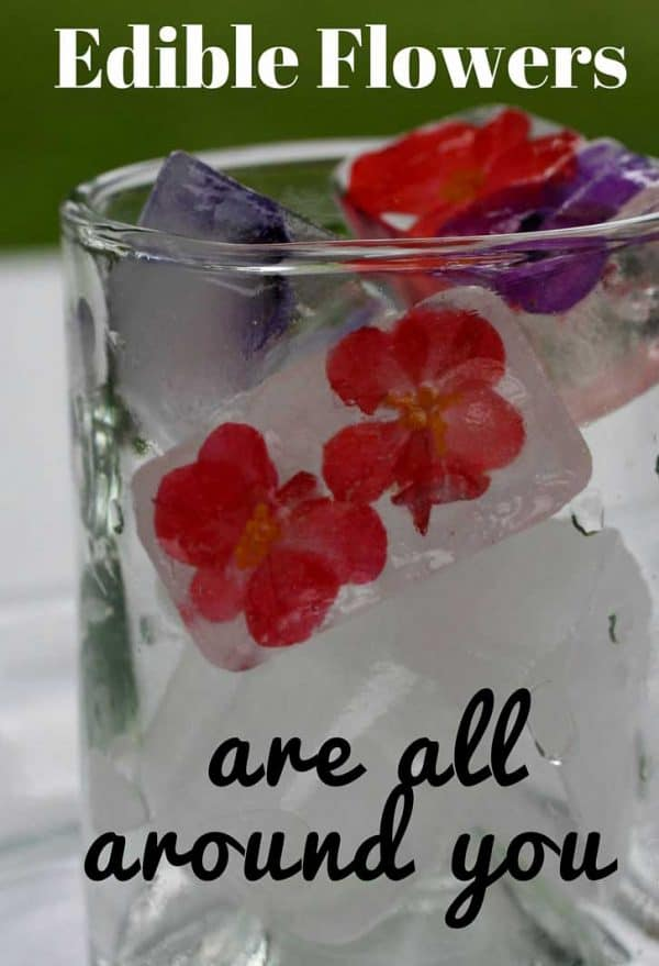 Edible Flowers are everywhere. Use them in your special drinks and dishes