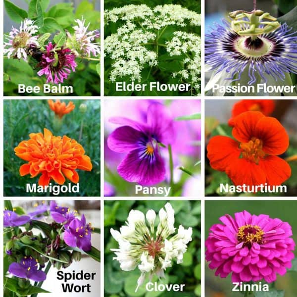Edible flowers add a certain pop to any meal. They are easy to grow |