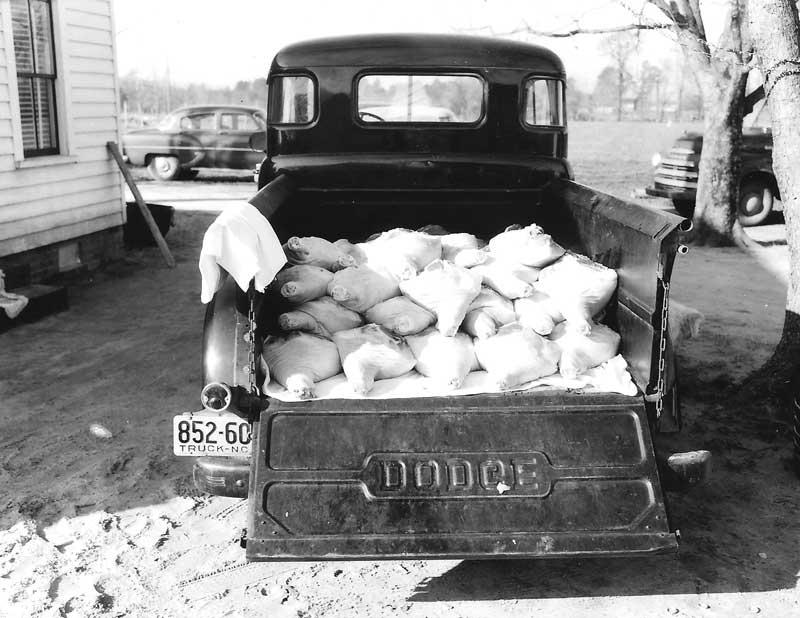 Old Dodge truck with hams at Big Mill B&B near Greenville, North Carolina